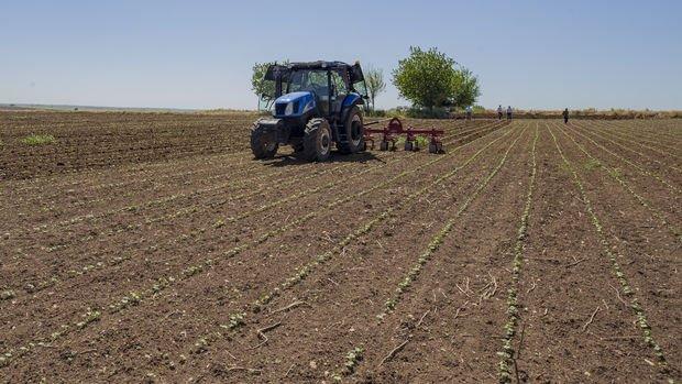 Tarım üretici fiyatlarında 18 ayın zirvesi