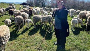 Yalova'nın kadın çobanı 170 hayvanlık sürüye bakıyor