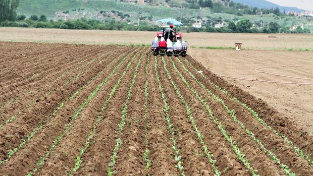 Tarım-ÜFE 19 ayın zirvesini gördü