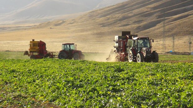 Türkiye'nin tarımsal ürün üretimindeki yeterlilik dereceleri açıklandı