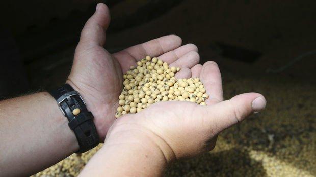 Çin'den soya ve mısıra karşı yeni hamle hazırlığı