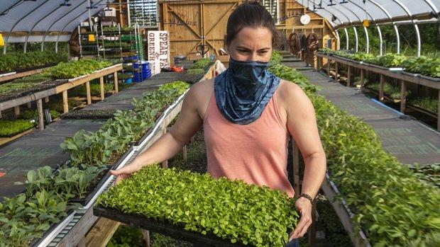 ABD'li çiftçilere 12 milyar dolarlık yeni pandemi desteği