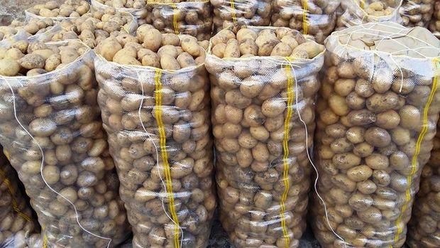 1 milyon 300 bin ton patates depolarda çürüyor