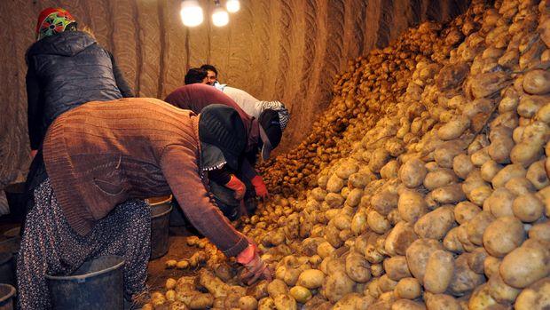 Elde kalan patates ve soğanın bir kısmını TMO alacak