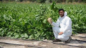 Tarımda programlı damla sulama yüzde 25 tasarruf, yüzde 3...