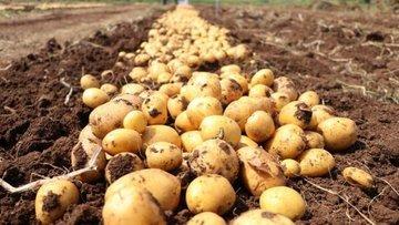 TMO'nun patates ve soğan alımlarında miktar sınırlaması o...