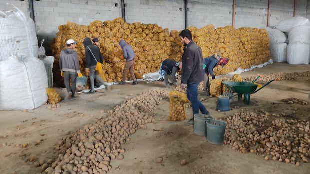 Patates ve kuru soğanda şimdi de fırsatçılar devrede