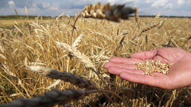 Tarım emtia fiyatları son 9 yılın zirvesine yaklaştı
