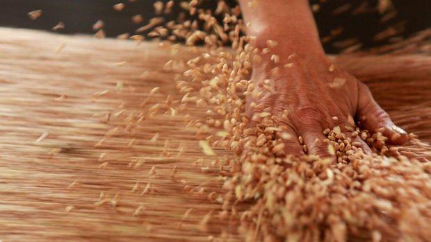 Rusya'dan 'Müdahale Fonu'ndaki tahıl rezervini artırma planı