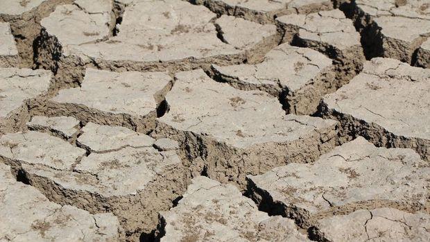 Kuraklıktan etkilenen çiftçiye dekar başına 100 TL destek