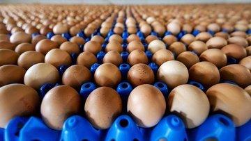 """""""Yumurta üreten sayısı azalıyor, işletmelerde atıl kapasi..."""