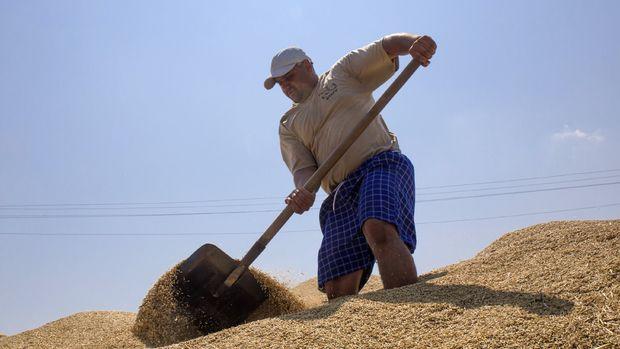 Ukrayna'nın tahıl üretiminde yüzde 17 artış bekleniyor