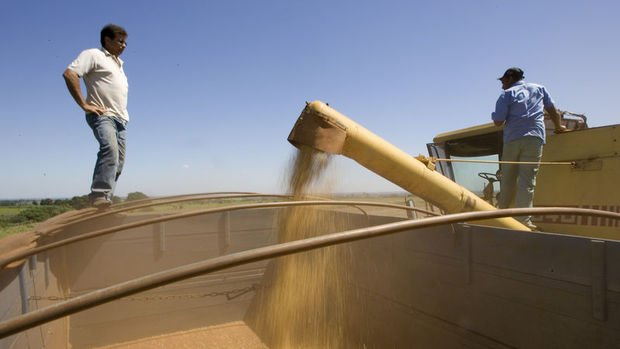 FAO ve OECD önümüzdeki 10 yılda tarım emtiasında düşüş bekliyor