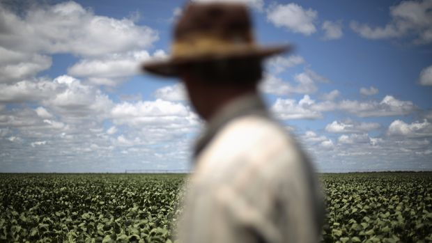 Küresel gıda fiyatları 12 aylık aralıksız yükselişinin ardından ilk kez geriledi