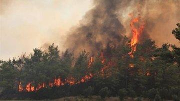 Orman yangınları Antalya'da tarımı vurdu