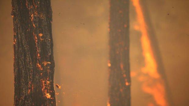 Orman yangınları gıda fiyatlarını nasıl etkiliyor?