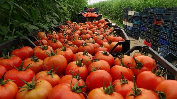 Merkez Bankası enflasyonda gıdadaki yükselişe dikkat çekti