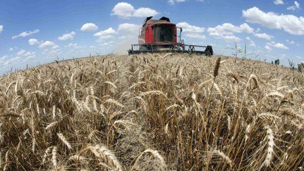 Societe Generale/Haigh: Gıda fiyatlarında yılın geri kalanında düşüş bekliyoruz