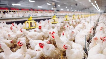 """Tavuk üreticisinden """"Bu fiyatlarla kışı atlatamayız"""" uyarısı"""
