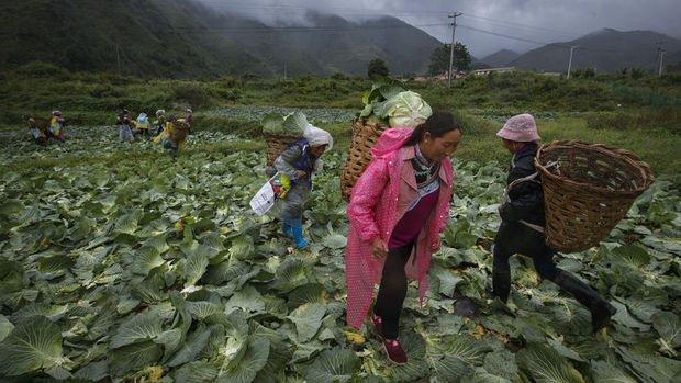 Çin'den gıda güvenliği uyarısı
