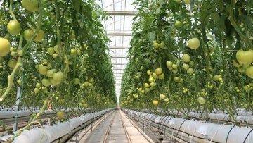 BİM, domates şirketi aldı
